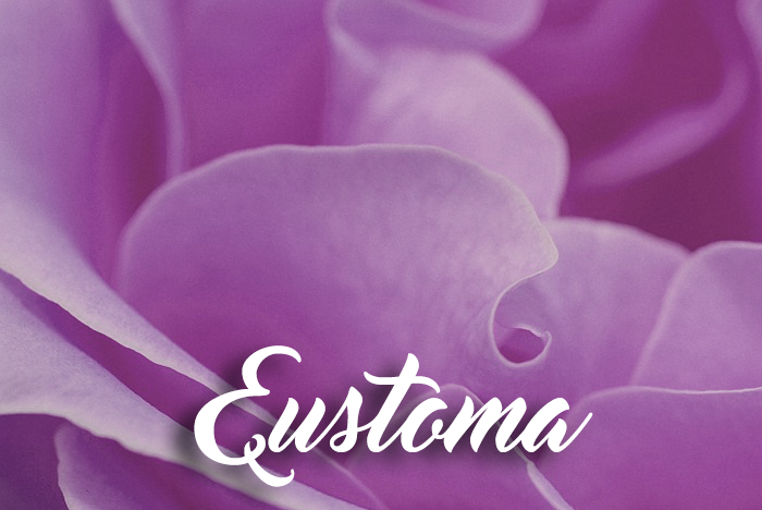 E is for… Eustoma graphic